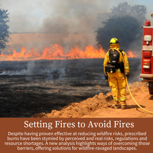 Setting Fires to Avoid Fires; Despite having proven effective at reducing wildfire risks, prescribed burns have been stymied by perceived and real risks, regulations and resource shortages. A new analysis highlights ways of overcoming those barriers, offering solutions for wildfire-ravaged landscapes.
