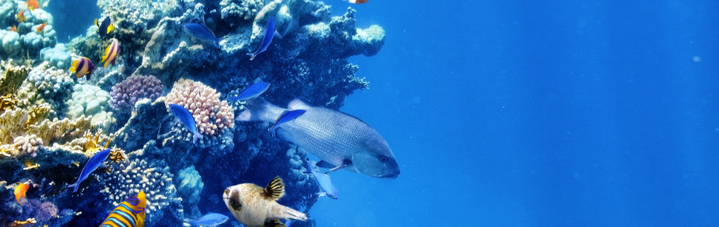 Fish near a coral reef in the ocean