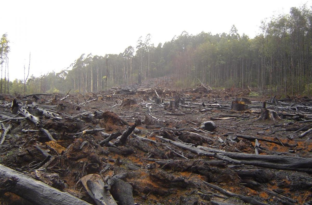Deforestation in Australia's Toolangi State Forest.
