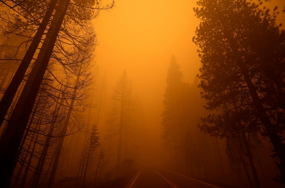 A road cuts through a smoky forest with burned trees on one side and unburned trees on the other.