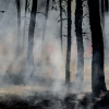 Charred black tree trunks are enveloped by wildfire smoke and water vapor.