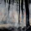 smoke and wildfire among trees in a forest