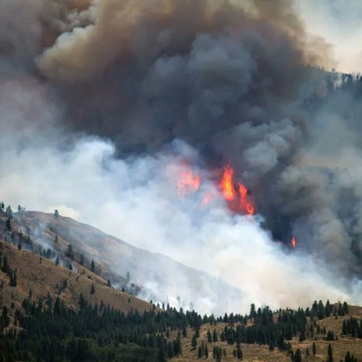 A wildfire burns on a forest hillside as smoke billows above