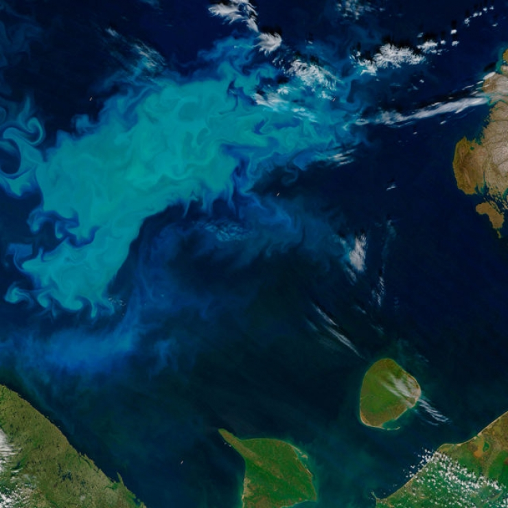 A light blue bloom of phytoplankton in the ocean