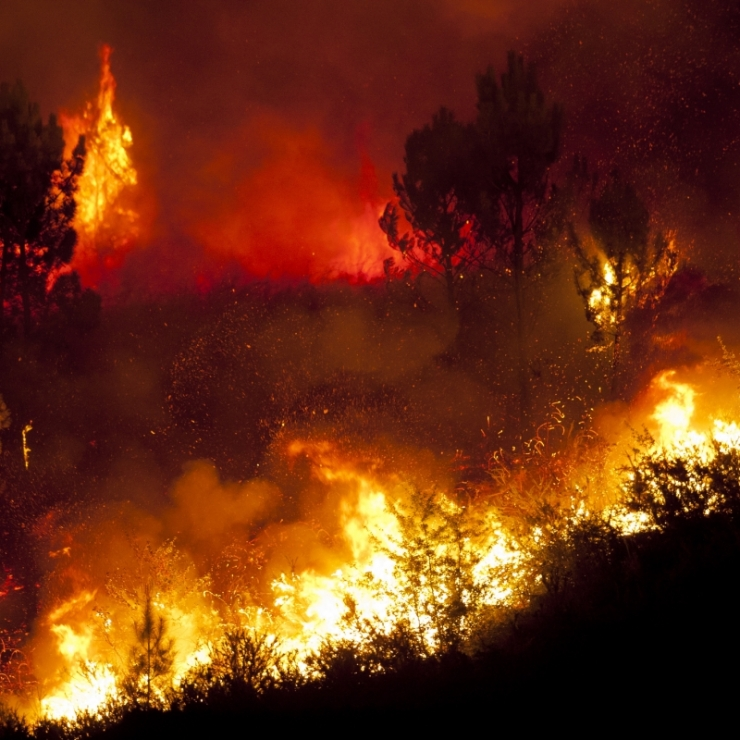 Wildfire burns at night on a hillside