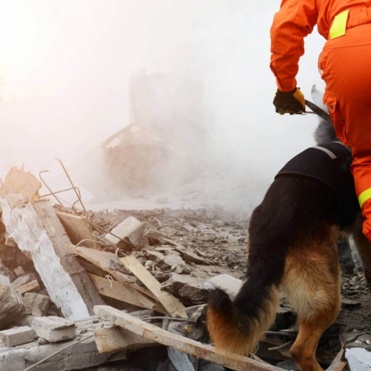 A man in emergency gear and a dog comb over rubble