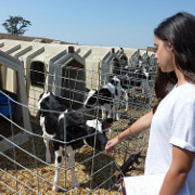 Stanford student Victoria Mendez visiting an organic dairy farm as part of her work on agricultural conservation easements for the California Department of Conservation.