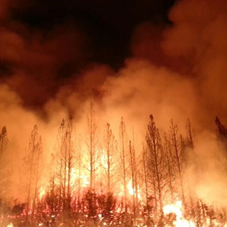 A wildfire rages in a forest