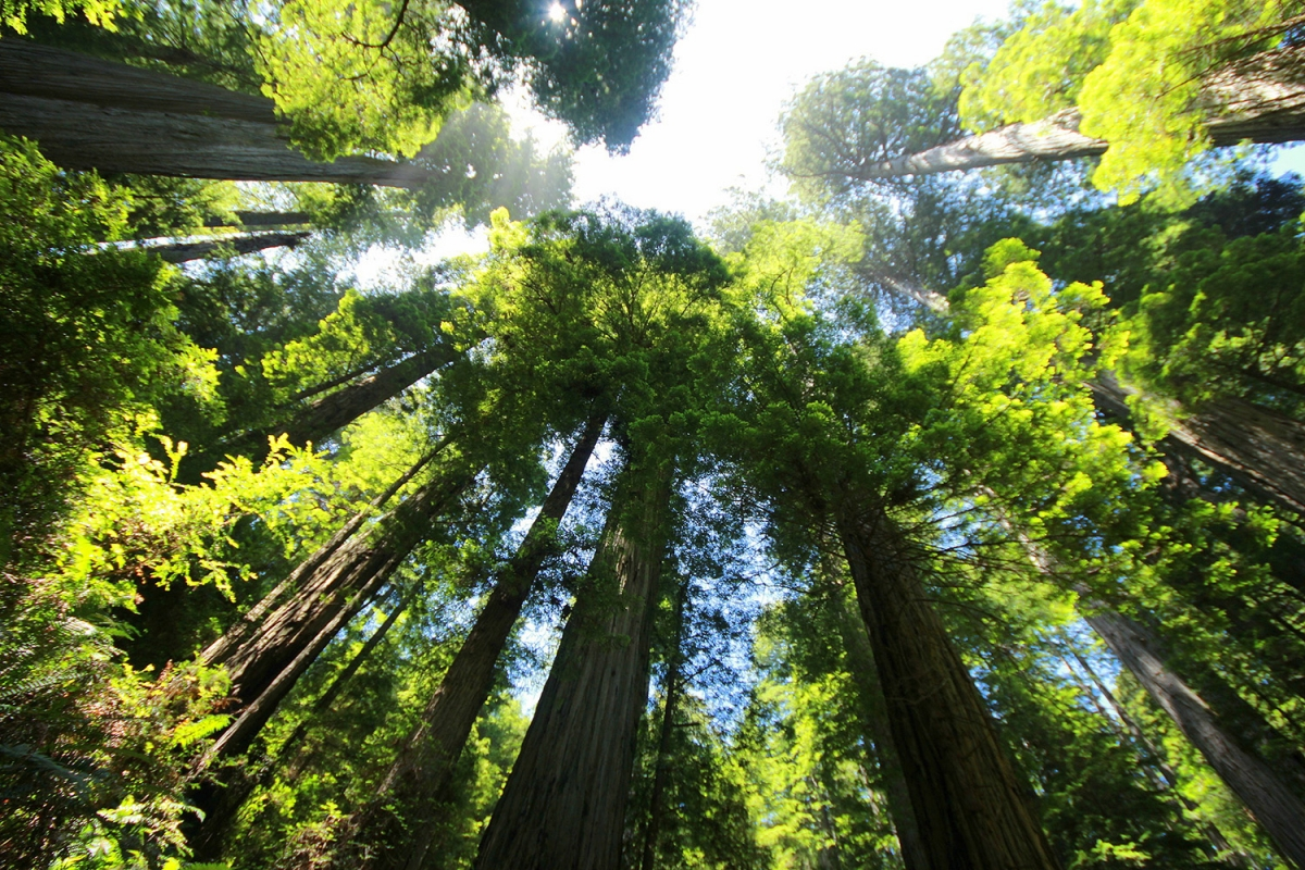 Giving Trees: Study Explores Limits of Forests' Climate Benefits